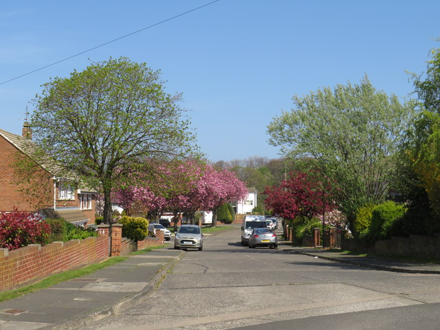 Spring colour on Lambourne Road, Sunderland