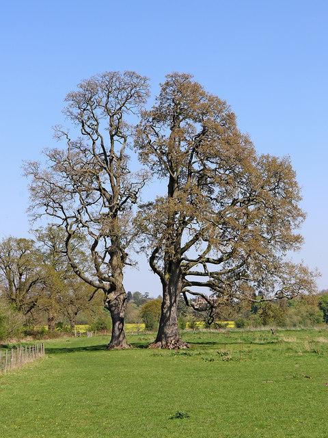Oaks, footpath and pasture near Burnhill Green, Staffordshire