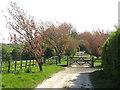 NZ3850 : Spring colour at Old Burdon, near Sunderland by Malc McDonald