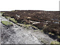SX7079 : Single Barrow, Hamel Down by Vieve Forward