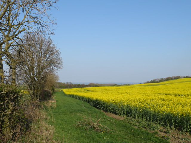 Rape field near Sunderland