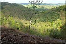 SX8281 : Beadon Brook valley by Derek Harper
