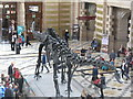 NS5666 : Diplodocus carnegii in Glasgow by M J Richardson