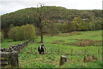SD9922 : Grazing for horses near Cragg Vale by Bill Boaden