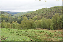 SD9922 : Spring trees in Cragg Vale by Bill Boaden