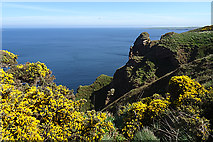 NJ8565 : Near Pennan Head by Anne Burgess