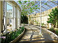 TQ1776 : Syon House Great Conservatory by Andrew Curtis
