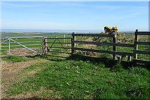 NJ8664 : Path to New Aberdour by Anne Burgess