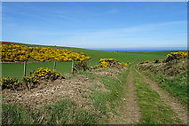 NJ8664 : Track to New Aberdour by Anne Burgess