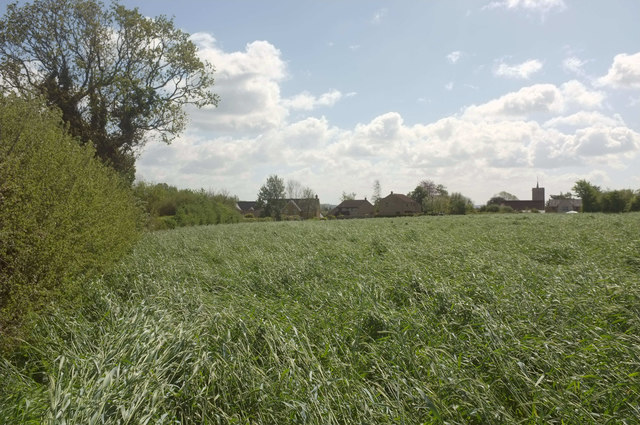 Grass field, South Petherton