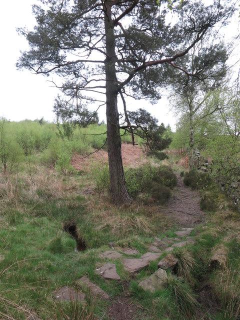 Public Footpath through Blue Mill woodland
