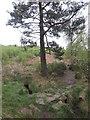 NU0403 : Public Footpath through Blue Mill woodland by Geoff Holland