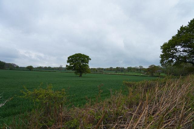Looking across the fields