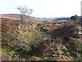 SX6881 : Bridlepath through former mine workings near Bennett's Cross by Vieve Forward