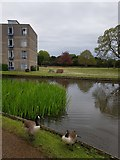 SE6250 : Derwent B Block and geese by DS Pugh