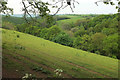 SX4666 : Field above Webber's Wood by Derek Harper