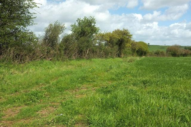 Grass field near Lower Severalls Farm solar farm