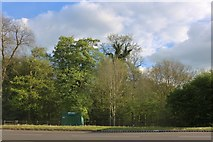 SP3877 : Binley Woods by Rugby Road by David Howard