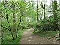 SO9272 : Path in High Wood to Dodford by Jeff Gogarty