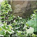 J1246 : Bench Mark, Banbridge by Rossographer