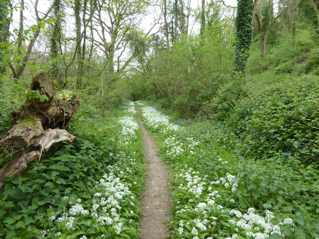 Path in Holyford Woods in May