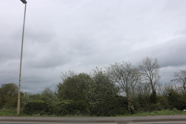 Bushes by London Road, Hampton Vale