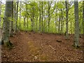 NJ0054 : Path in Darnaway Forest by valenta