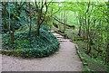 NO3802 : Letham Glen, Leven by Bill Kasman