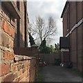 SP2965 : Glimpse of a lopped beech tree, rear of Emscote Road, Warwick by Robin Stott