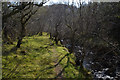NG5541 : Allt a Bhraghad watercourse, Isle of Raasay by Andrew Tryon