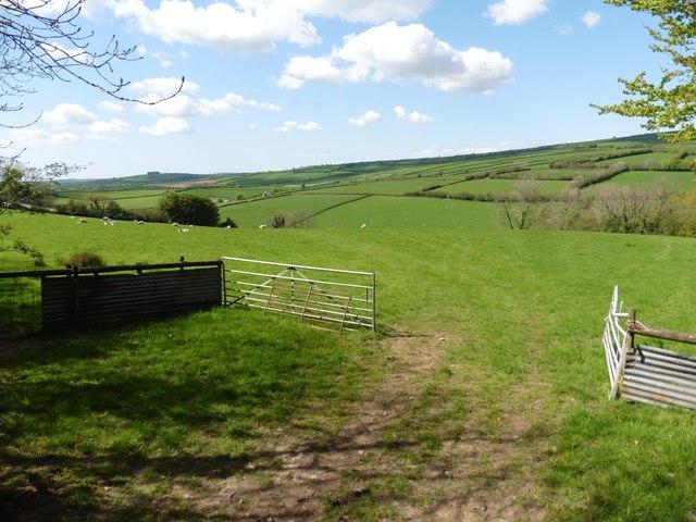 Sheep pasture above Marledge