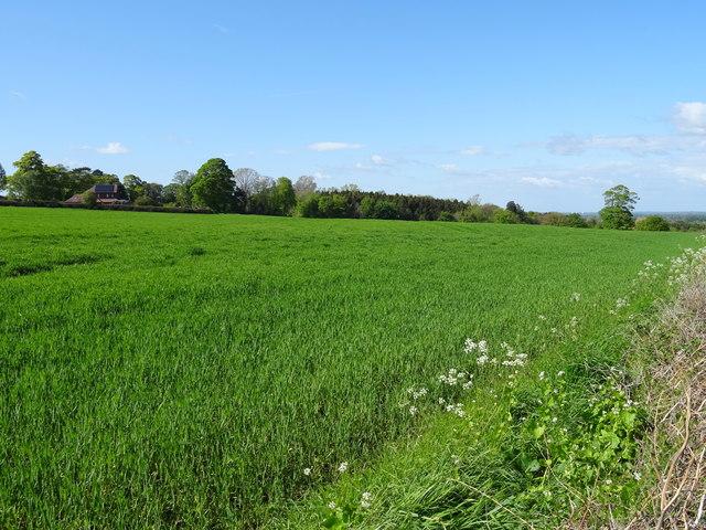 Field off Hoseley Lane