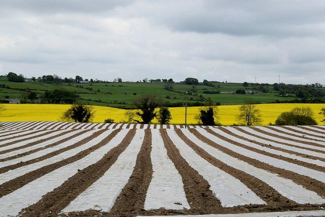 Crops, Ardstraw