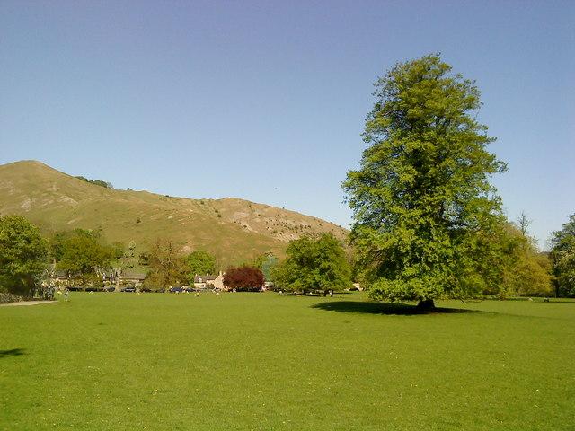 Trees in Ilam Park