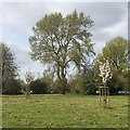 SP2866 : Grey Poplar near the Coventry Road roundabout, Warwick by Robin Stott