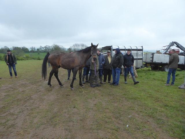 Horsedealing at Stow Horse Fair May 2019
