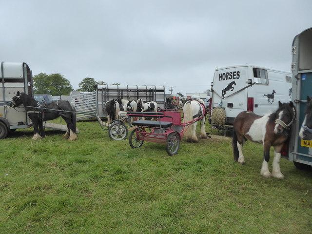 Horses at Stow Horse Fair May 2019
