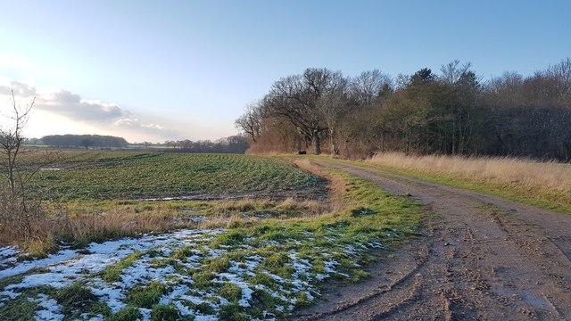 Farm track to Hares' Grove