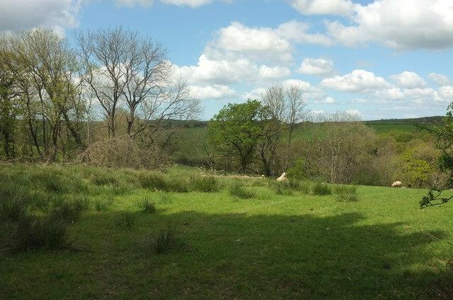 Sheep pasture north of North Heale