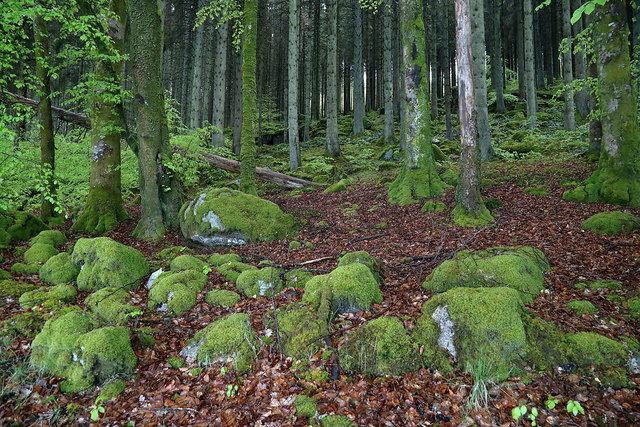 A mossy wood by the A762