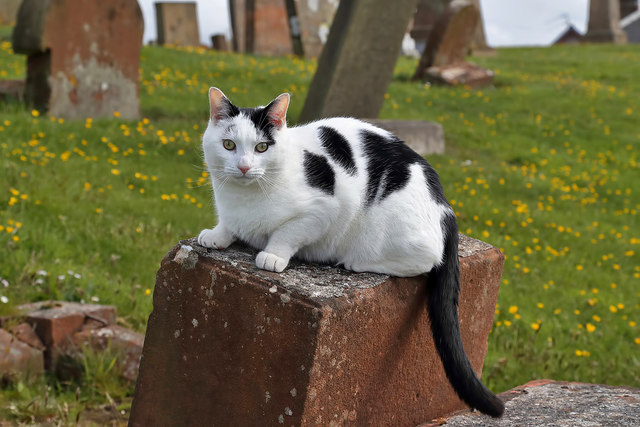 A churchyard cat