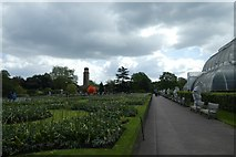 TQ1876 : Palm House and alliums by DS Pugh