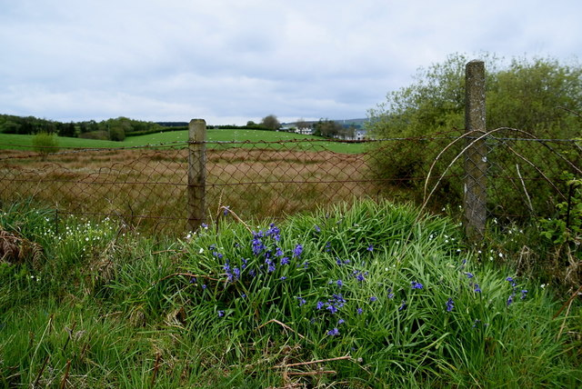 Bluebells, Ballynatubbrit by Kenneth  Allen