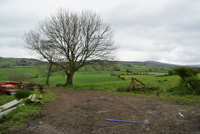Tree and countryside, Ballykeel by Kenneth  Allen