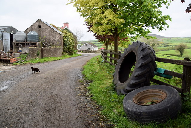 Farm cat crosses road, Ballykeel by Kenneth  Allen