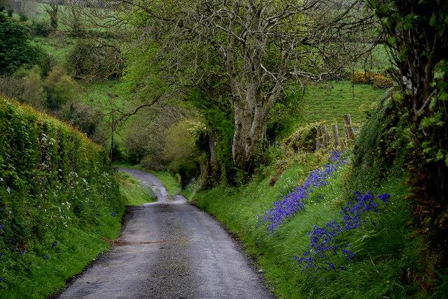 Bluebells, Altoghal by Kenneth  Allen