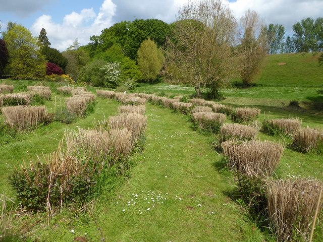 Mizmaze at Mount Ephraim Gardens, Hernehill