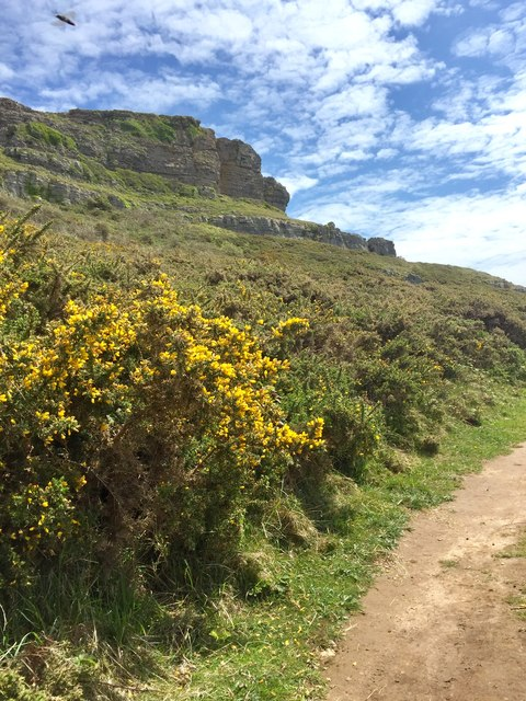 Footpath and cliff
