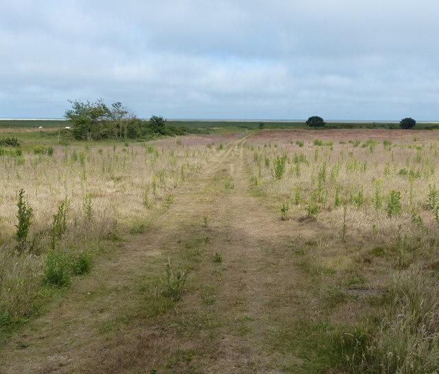 Dingle Marshes near Dunwich
