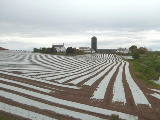 Field of plastic strips